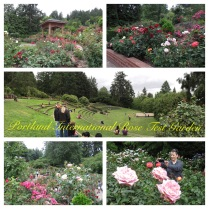 A collage of garden pics